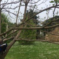 Día de Libro en la Casona Azul de Corvera